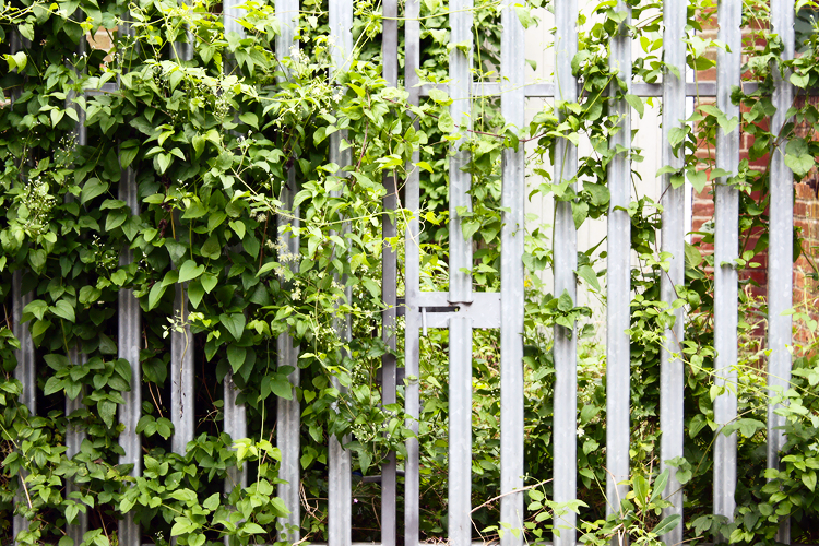 white-green-oxford-fence