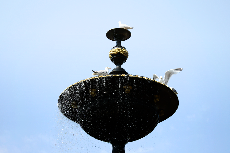 brighton-fountain-seagulls