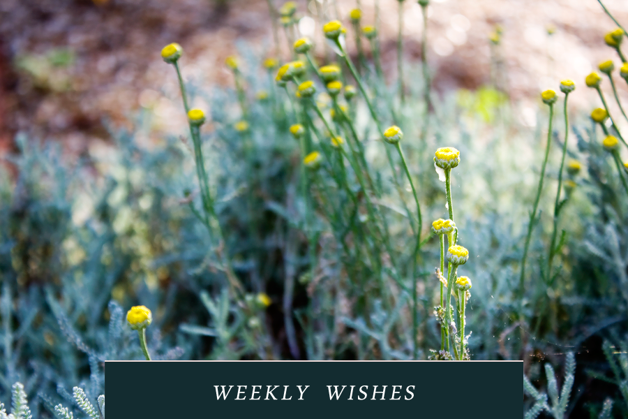 weekly-wishes-9-22