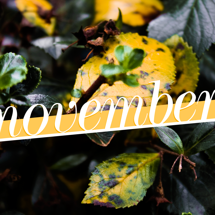 Welcome to November - Photography & Design by Lix Hewett