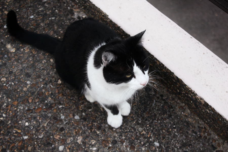 cats-london-belsize-2
