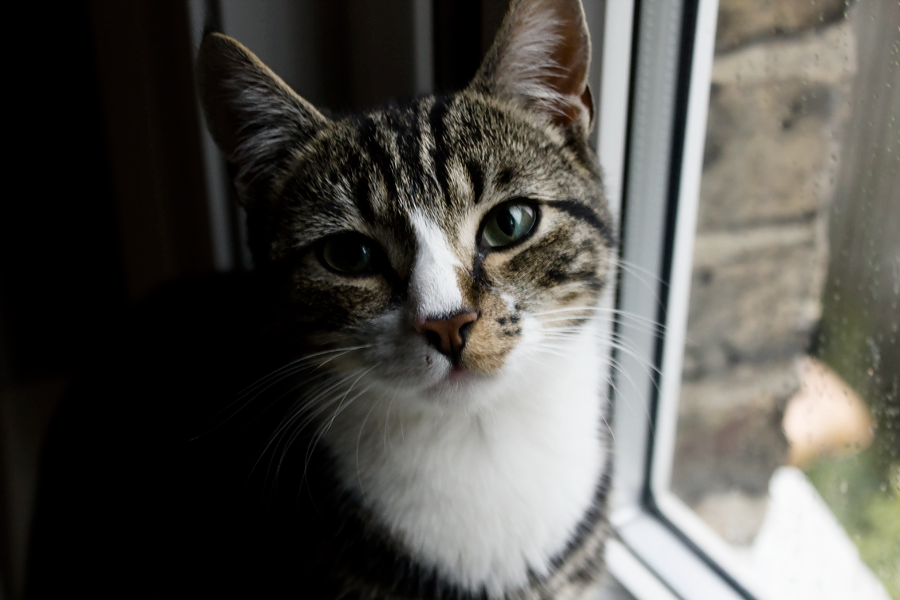 cats-london-ollie-2