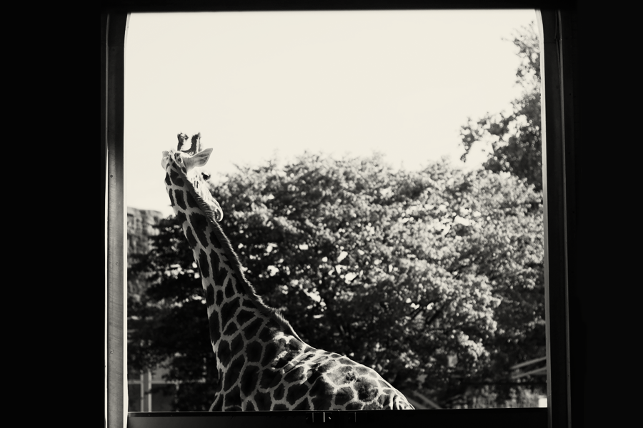london_zoo_09_sepia