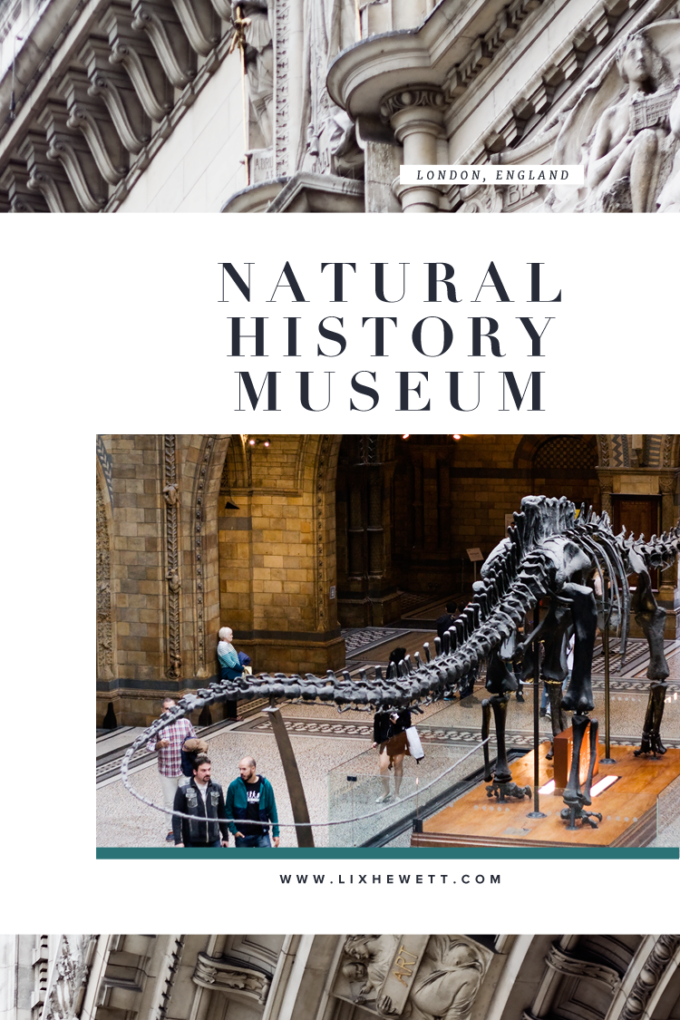 Natural History Museum / London / Lix Hewett