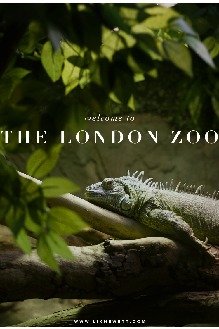 ZSL London Zoo by Lix Hewett